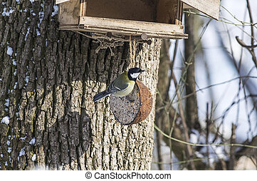Great tit and bird-table - Birdfeeder with a great tit