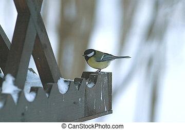 Great tit bird sits on feeder