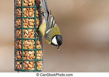 great tit feeding on bird feeder