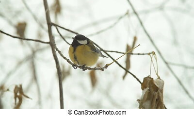 Great tit flying from the tree