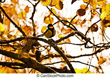Great tit in an autumnal forest
