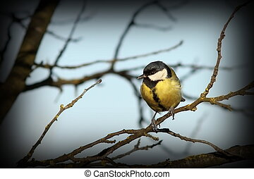 great tit on a branch in winter