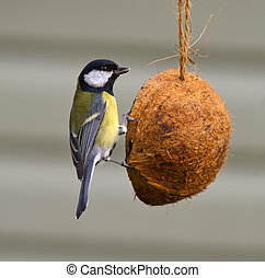 Great Tit on a coconut feeder
