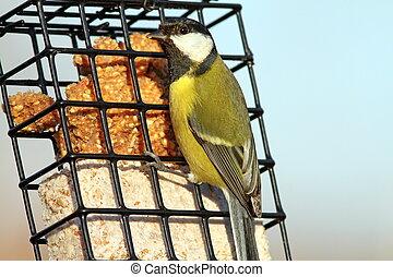 great tit on a lard feeder