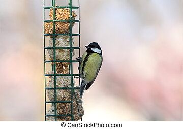great tit on hung feeder - great tit ( parus major ) on hung...