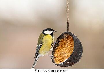 great tit on lard feeder in the garden