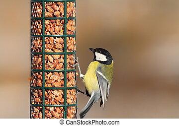 great tit on peanut feeder
