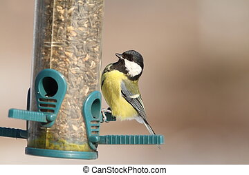 great tit on sunflower seed feeder