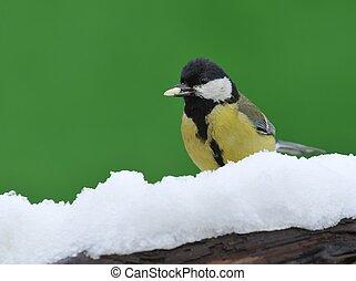 Parus major in the snow.
