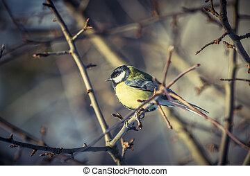 Great tit Parus Major on a tree in winter