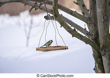 Great tit Parus Major on feeder at winter, close up