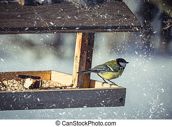 Great tit Parus Major on feeder at winter