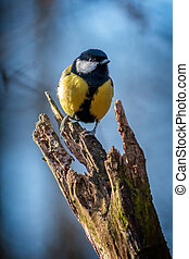 Great tit resting on a tree trunk