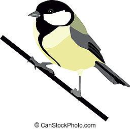 Great Tit, Tit, Bird, Wildlife, Awe, Formal Garden, Europe, Multi Colored, England, Nature, Paved Yard, British Birds