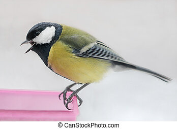 Great Tit Tweeting at a Feeder