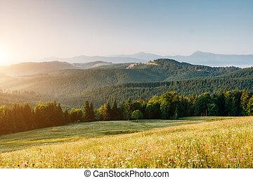 Great view of alpine village glowing by sunlight. Location place Carpathian, Ukraine, Europe.