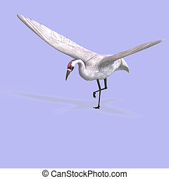 Great White Crane - great white crane on blue back With...