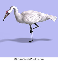 Great White Crane - great white crane on blue back With ...