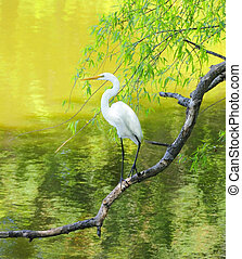 Great White Egret Perched on a Limb - Great white egret...