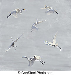 Great White Egrets Watercolor - Digital Painting Of Great ...