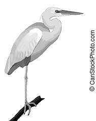 Great White Heron - Ardea herodius (morph of Great Blue...