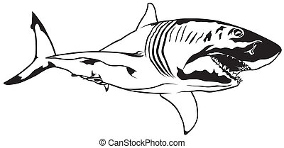 Shark - Great White Shark - Black Illustration, Vector