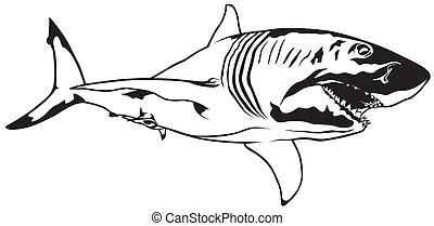 Shark - Great White Shark - Black Illustration, Vector