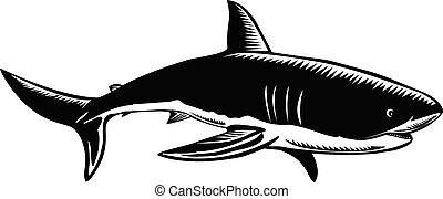 Great White Shark Carcharodon Carcharias White Shark or ...