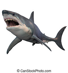 The Great White shark can grow over 8 meters or 26 feet and live to 70 years of age.