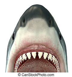 Great White Shark Jaws - The Great White Shark is the ...