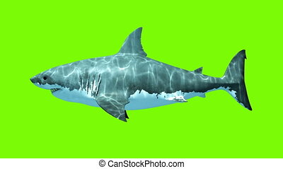 Great White Shark Megalodon on a green background. Two...