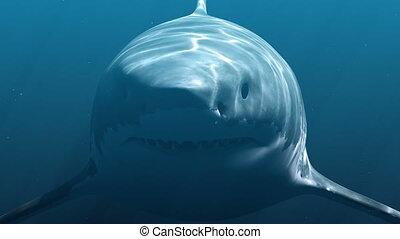 Great White Shark (Megalodon). Realistic 3d animation 4K.