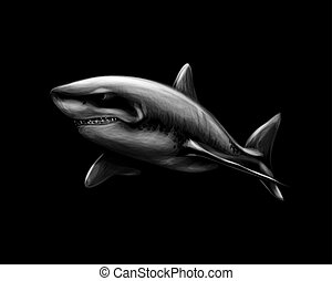Great white shark on a black background. Vector illustration