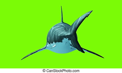 Great White Shark on a green background. Back View, Two...