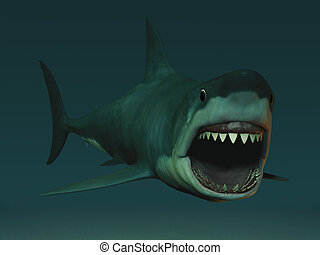 A great white shark (charcarodon charcarias) with its mouth open ready to attack.