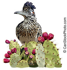 Greater Roadrunner in Opuntia - Greater Roadrunner -...