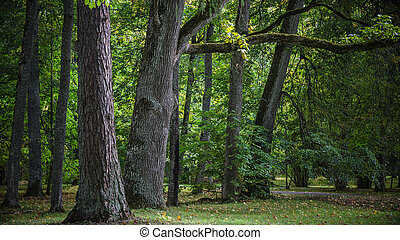 Greater trees in old park, an autumn landscape