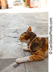 grec, chat gouttière