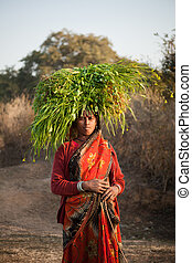 gree, byinvånare, bärande, indisk, kvinna