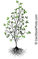 gree, vector, árbol, y, raíz, encima, un, w