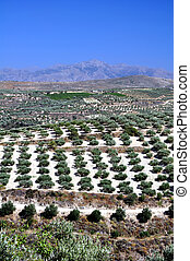 greece., agricultura, crete