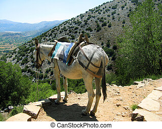 Greece, Crete, mule in mountain