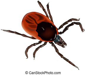 Greedy tick (Ixodes ricinusf) - High detailed illustration