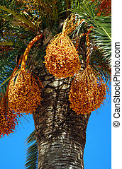Greek palm tree