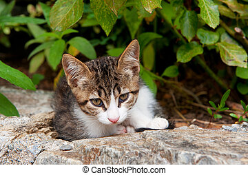 Greek tabby stray cat outdoor on a stone wall
