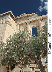 Greek temple and olive tree