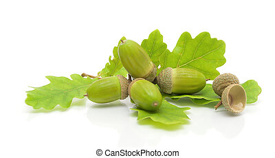 green acorns and oak leaves on a white background - immature...