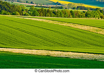 Green agricultural scenery