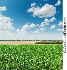 green agriculture field and blue cloudy sky