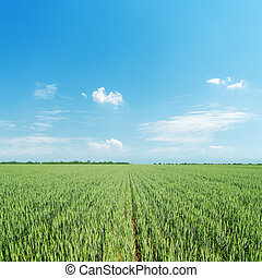 green agriculture field and light blue sky